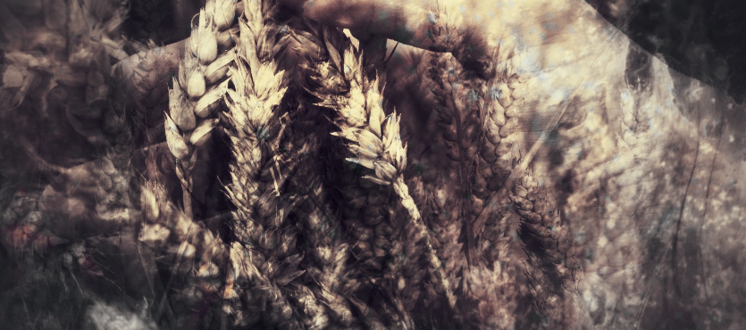 """harvesting"" by gbmediadesign"